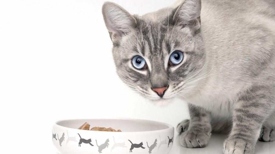Jede unkastrierte Katze kann ab dem sechsten Lebensmonat zwei- bis dreimal im Jahr jeweils drei bis sechs Nachkommen zeugen.