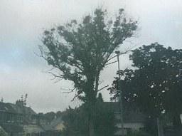 Baumfällungen: Esche, Niederdonker Weg 3