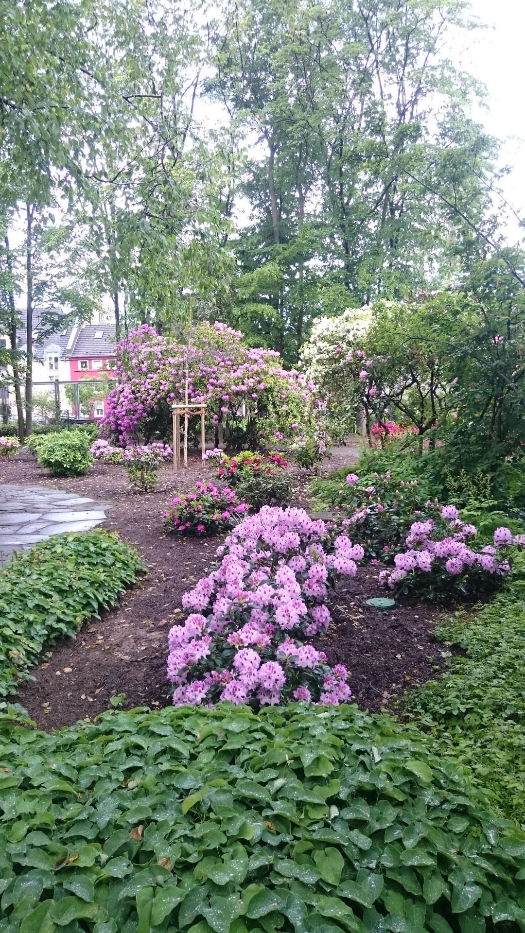 2705 Neue Rhododendren im Botanischen Garten_2.jpg