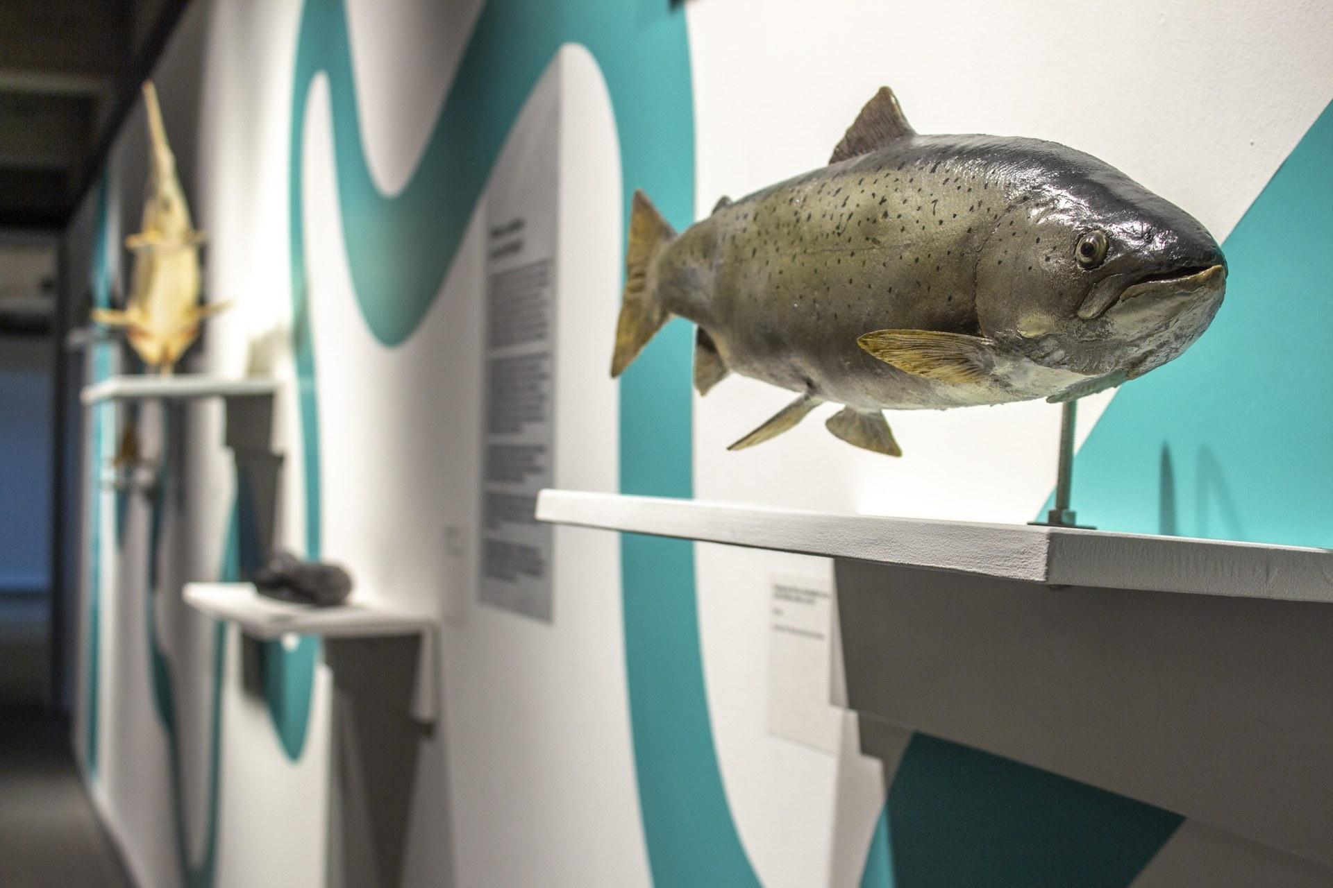 2509 Fisch Land Fluss 04.JPG
